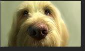 Screenshot 1 Corel Painter 2020